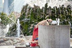 De jongen speelt met het water in fontein stock afbeeldingen