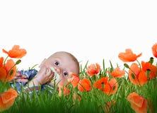 De jongen van de baby in gras op een weide stock afbeeldingen
