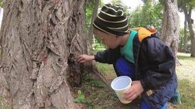 De jongen verzamelt insecten van de boomstam van een boom stock videobeelden