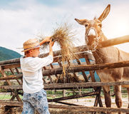 De jongen voedt een ezel op het landbouwbedrijf royalty-vrije stock fotografie
