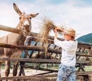 De jongen voedt een ezel op het landbouwbedrijf royalty-vrije stock foto's
