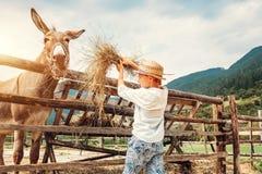 De jongen voedt een ezel op het landbouwbedrijf stock afbeeldingen