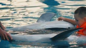 De jongen zwemt met dolfijnen