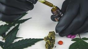 De jongeregreep in zijn olie van de handcannabis E De cannabis is een concept kruidengeneeskunde stock video