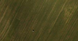 De jonggehuwden lopen op het gebied met groen gras en zonnig weer stock videobeelden