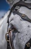 25 de julio de 2015 Presentación ceremonial de la escuela de montar a caballo del Kremlin en VDNH en Moscú Foto de archivo libre de regalías