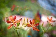 De jumeau fleur magnifiquement Photo stock