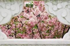 De körsbärsröda blomningarna i ramen Arkivbilder