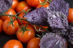 De körsbärsröda tomaterna och basilikan Arkivbild