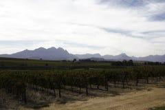 De Kaap Winelands dichtbij Stellenbosch, Zuid-Afrika royalty-vrije stock afbeelding