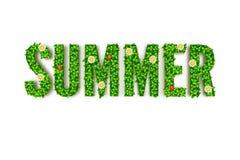 De kaart van de de zomergroet, inschrijving in hoofdletters en groene bladeren met bloemenkevers, lieveheersbeestje Stock Fotografie