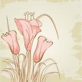 De kaart van de groet met abstracte calla leliebloemen Stock Afbeelding