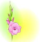 De kaart van de groet met een bloem Royalty-vrije Stock Afbeelding