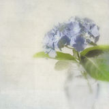 De kaart van de hydrangea hortensia met ruimte voor tekst. Royalty-vrije Stock Fotografie
