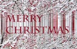 De kaart van de Kerstmisgroet of banner met sneeuw behandelde appelbomen Stock Foto's