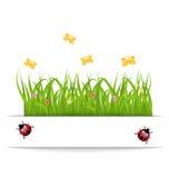 De kaart van de lente met gras, bloem, vlinder, lieveheersbeestje Stock Fotografie