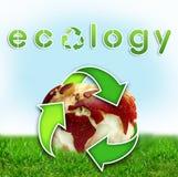 De kaart van de Wereld van de ecologie op een appel stock illustratie