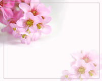 De kaart van groeten met bloemen Stock Afbeelding