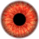 De kaart van het oog stock fotografie