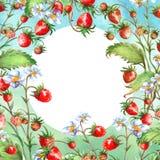De kaart van de waterverfgroet, uitnodiging met een installatieaardbei Tot bloei komende struik met een rode bes en een bloem stock illustratie