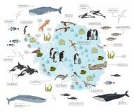 De kaart van de zuidpool, van Antarctica, van de flora en van de fauna, vlakke elementen Anim royalty-vrije illustratie
