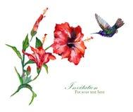 De kaartmalplaatje van de hibiscusgroet Royalty-vrije Stock Fotografie