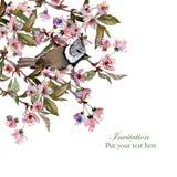 De kaartmalplaatje van de Sakuragroet Royalty-vrije Stock Foto's
