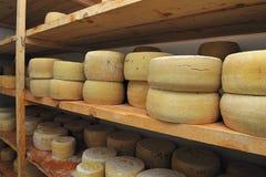 De kaas van de geit Royalty-vrije Stock Foto's