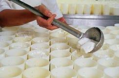 De kaas van de geit Royalty-vrije Stock Afbeeldingen