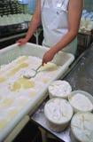 De kaas van de geit Stock Foto
