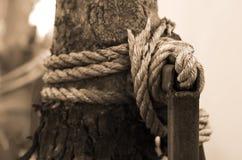 De kabel van Manilla rond de boom Royalty-vrije Stock Afbeelding