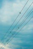 De kabels van de hoogspanning Royalty-vrije Stock Afbeeldingen