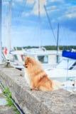 De kade van de Pomeranianverschansing op de achtergrond van jachten Royalty-vrije Stock Fotografie