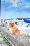 De kade van de Pomeranianverschansing op de achtergrond van jachten Royalty-vrije Stock Afbeeldingen