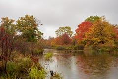 De kaders van de herfstbladeren het vogeltoevluchtsoord in Presque-Eiland stock afbeelding