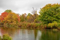 De kaders van de herfstbladeren het vogeltoevluchtsoord in Presque-Eiland stock foto's