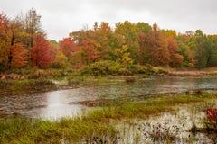 De kaders van de herfstbladeren het vogeltoevluchtsoord in Presque-Eiland stock fotografie