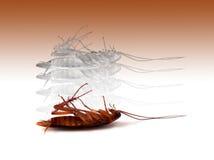 De kakkerlak van het doodsinsect met geest uit lichaamservaring Stock Fotografie