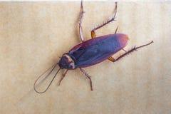 De kakkerlakken die op het bruine document als achtergrond zijn stock foto