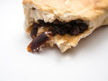 De kakkerlakken dragen ziekten die u moet elimineren stock foto