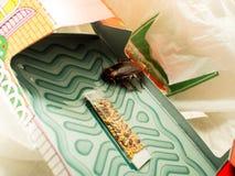 De kakkerlakken sloten valdozen opgesloten kakkerlakken in kitche op royalty-vrije stock afbeelding