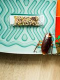 De kakkerlakken sloten valdozen opgesloten kakkerlakken in kitche op stock afbeelding