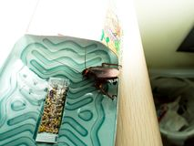 De kakkerlakken sloten valdozen opgesloten kakkerlakken in kitche op royalty-vrije stock afbeeldingen