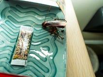 De kakkerlakken sloten valdozen opgesloten kakkerlakken in kitche op stock afbeeldingen