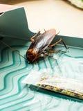 De kakkerlakken sloten valdozen opgesloten kakkerlakken in kitche op stock fotografie
