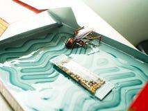 De kakkerlakken sloten valdozen opgesloten kakkerlakken in kitche op royalty-vrije stock foto