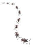 De Kakkerlakken van het stuk speelgoed stock fotografie