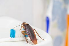 De kakkerlakken zijn op de tandenborstel in de badkamers, stock fotografie