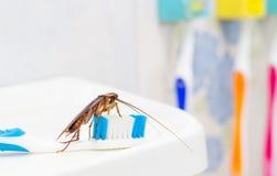 De kakkerlakken zijn op de tandenborstel in de badkamers, stock foto's