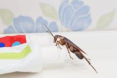 De kakkerlakken zijn op de tandpasta in de badkamers stock foto's